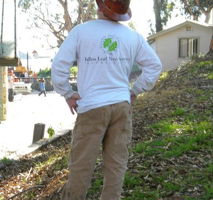 Certified Arborist Offers Tree Risk Assessments To The Sacramento, CA Area