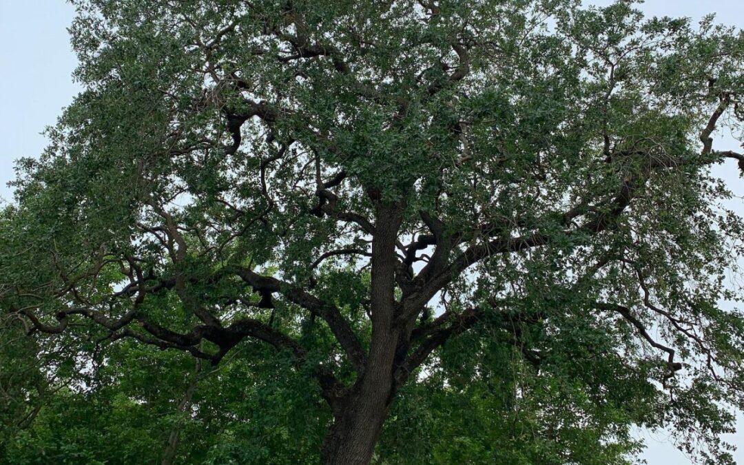 Fallen Leaf Tree Management Offers Comprehensive Tree Health Care Service
