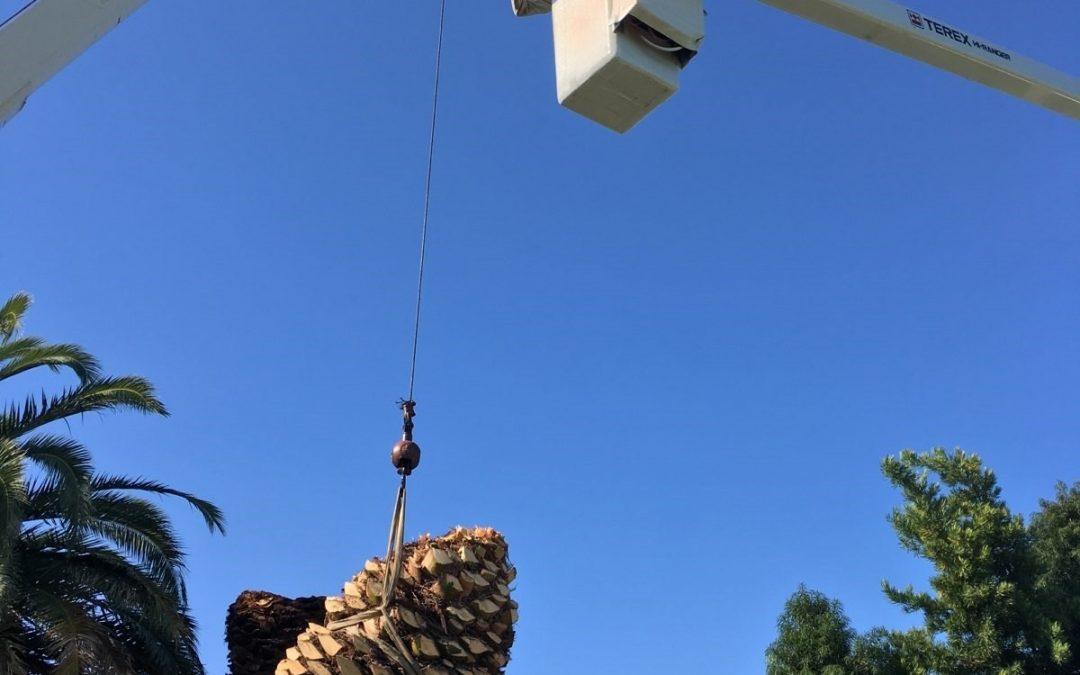 Sacramento Arborist Shares Tree Pruning Tips